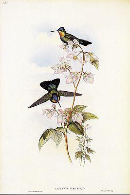 "1990 Vintage HUMMINGBIRD #336 ""COSTA RICAN HUMMING BIRD"" GOULD Art Lithograph"