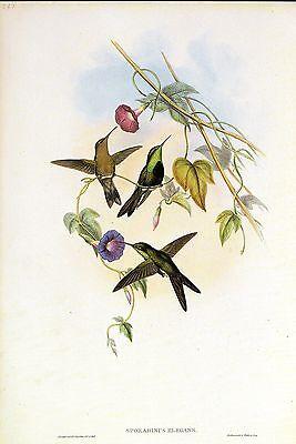 1990 Vintage HUMMINGBIRD #347