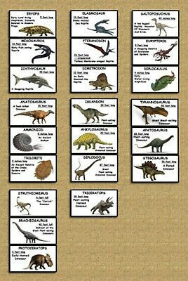 DINOSAUR FLASH CARDS Picture and Words Educational Gift Teacher Designed - Cheap Teacher Gifts