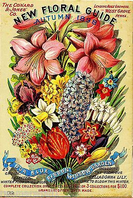 1898 Floral Guide Vintage Flowers Seed Packet Catalogue Advertisement Poster