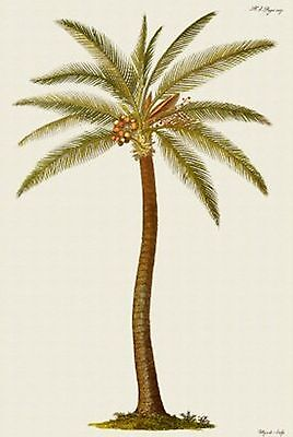 Coconut Palm Tree~counted cross stitch pattern #282~Nature Flowers Floral Chart ()