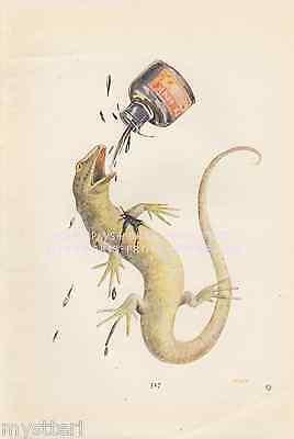 Alice In Wonderland-Red Queen Of Hearts-Lizard-Ink-1920 VINTAGE PRINT-Picture