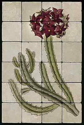 1624 Orchid Stapeliad Mural Tumbled Marble Tiles Kitchen Ideas