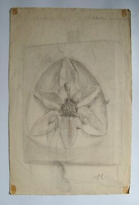 Student art - Mid Century - Charcoal - Still life - Floral - Nude - Figure study