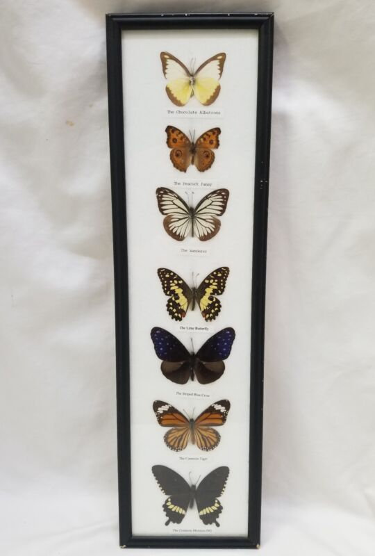 7 Real Framed Mounted Butterflies Malaysia