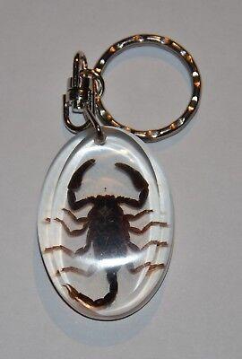 Insekten Schlüsselanhänger Skorpion in Kunstharz Scorpion