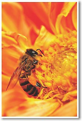 Honey Bee Gathering Nectar - NEW Animal Wildlife POSTER Bee Gathers Nectar
