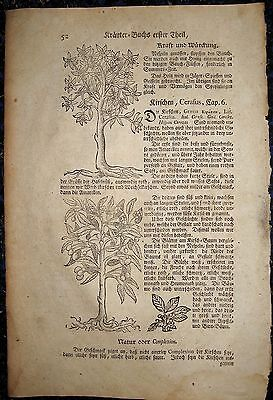 KIRSCHBAUM, BREIAPFELBAUM. Botanik. Orig. Holzschnitt von LONITZER 1557 (1700)