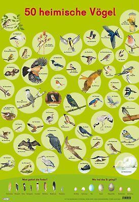 Mein Lernposter: 50 Heimische Vögel Maße: 52 x 75,5 cm, Mein Lernposter Mein L..