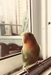 Unwanted parrot needed