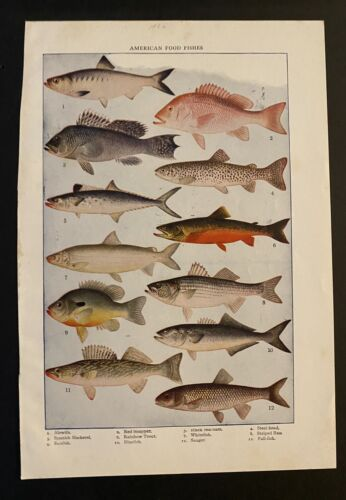 Antique Print American Food Fishes - $9.99