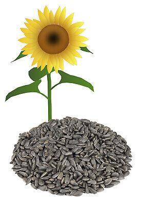 Sonnenblumenkerne schwarz 25 kg (in 10 Tüten) NEUE ERNTE regional Vogelfutter