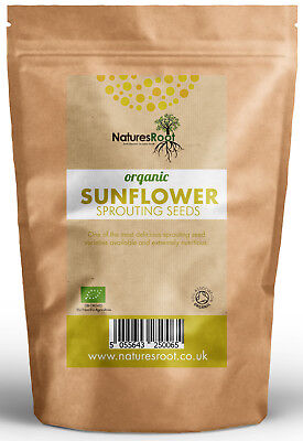 Organic Sunflower Sprouting Seeds - Superfood | BEST TASTING Microgreen