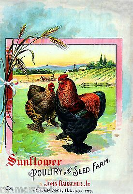 Sunflower Rooster Chicken Vintage Seed Packet Catalogue Advertisement Poster