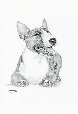 ENGLISH BULL TERRIER (5) dog Limited Edit art drawing print signed by UK artist for sale  Shipping to Canada