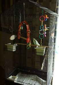 Budgie w cage and accessories!