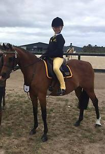 Educated Pony Mornington Mornington Peninsula Preview