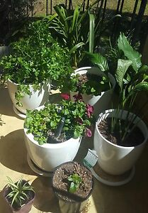 Pots and plants included Caulfield South Glen Eira Area Preview