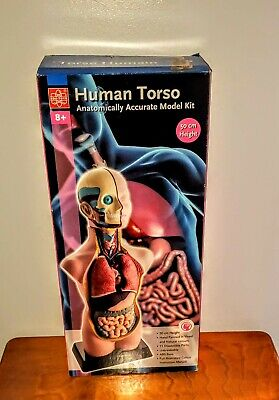 20 Human Torso With Removable Organs Edu-toys Anatomically Accurate Model