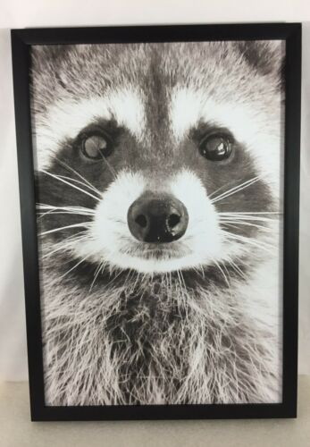 Black Framed RACCOON Picture - Close Up Raccoon Face- Lodge Log Cabin Wall Decor