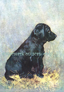 Vintage Art~Black Labrador Retriever Puppy Dog~ NEW Large Note Cards