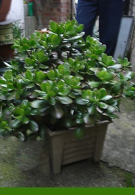 Not have enough money? Buy money plant. Owner cash flow very good. Collect SW19