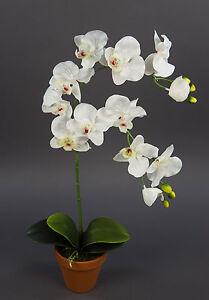 Orchidee 65cm weiß-creme DP Kunstblume künstliche Blumen Orchideen Kunstpflanzen