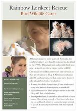 LORIKEET ADOPTER/FOSTER/CARER Carine Stirling Area Preview