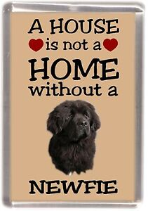 Newfoundland dog fridge magnet quot a house is not a home quot by starprint