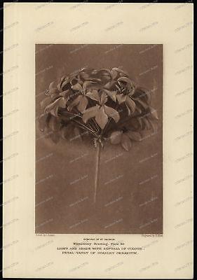 Druck-Stahlstich-Engraving-John Ruskin-Schools of St George-G.Allen-71