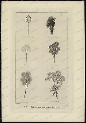 Druck-Stahlstich-Engraving-Turner-J.Cousen-Allen-Aspen under Idealization-78