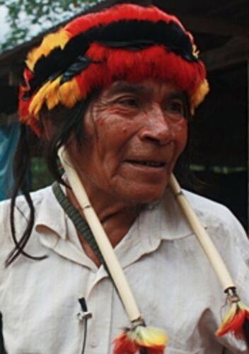 3 COLOR RARE ACHUAR ASHUAR PERU AMAZON TOUCAN FEATHER HEADDRESS AUTHENTIC JIVARO