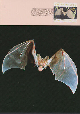 (Sonar Ghost Bat Threatened Species Australia Postcard Maxicard Maxi Card)