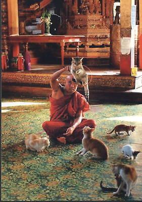 Postkarte: Mönch  dressiert Katzen im Kloster, Burma