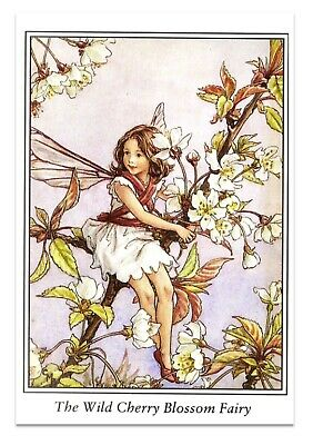 Flower Fairies Vintage Image 5 pk cards The Wild Cherry Blossom Fairy A6 blank
