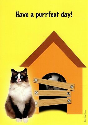 Funny Happy Birthday Perfect Cat Day Dog In Doghouse Greeting Card