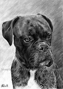 Portrait 3 noir et blanc chien boxer impression - Dessin de boxer ...