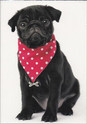 Klappkarte: niedlicher schwarzer Mops mit Halstuch, de luxe - black pug