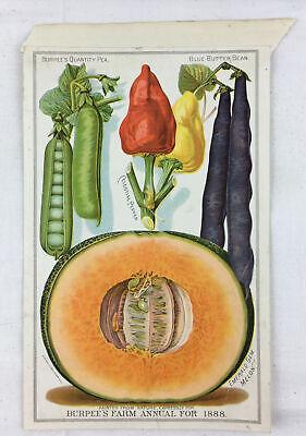 Antique 1888 Litho Burpee Farm Annual Seed Catalog Page Pepper Melon Butter Bean
