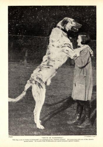 1930s Antique Irish Wolfhound Dog Print Bruce of Raikeshill Wolfhound 3602-M