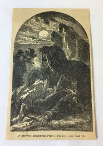 1877 magazine engraving ~ EXCITING ADVENTURE WITH A WALRUS
