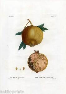 punica granatum granatapfel frucht pflanze obst farbstich redoute gabriel 1810 ebay. Black Bedroom Furniture Sets. Home Design Ideas