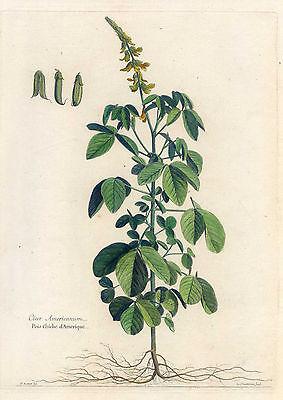 Cicer - Kichererbse-Botanik - Kupferstich Robert-Chastillon 1680 selten-Pflanze