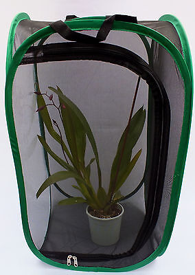 Praying mantis/Stick Insect,Butterfly,2ft Tall Pop Up Cage With PVC View Window