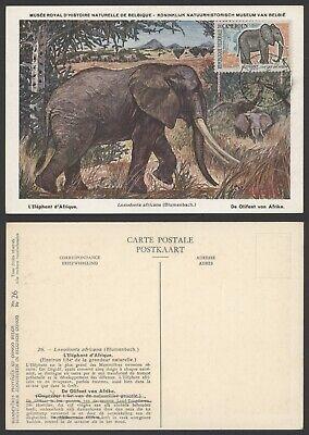 Cameroon 1962 - Maximum Postcard Elephant R537