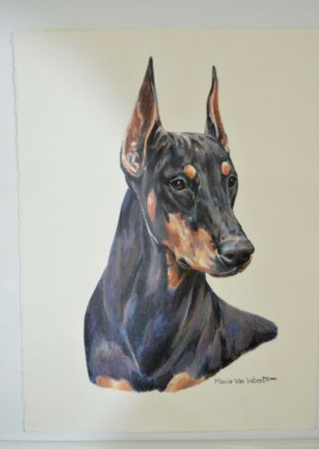 Original Signed Marcia Van Woert Doberman Dog Artwork Drawing