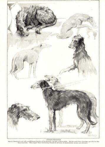 1930s Antique DEERHOUND Dog Print Branfoot Scottish Deerhound Dog Art 3858n