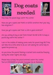 Dog coats needed to give to the pound Potts Point Inner Sydney Preview