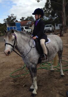 Stunning Mare 6yrs 11.3hh $2500 neg Kendenup Plantagenet Area Preview