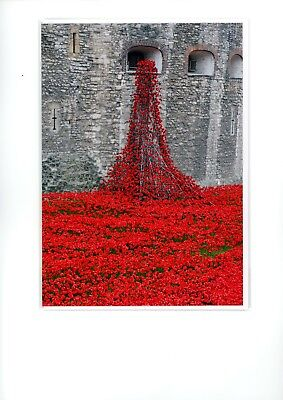Poppies at the Tower of London, First World War, memorial card